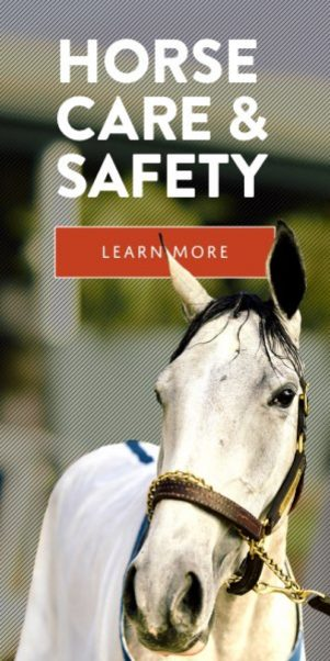 Horse Care and Safety