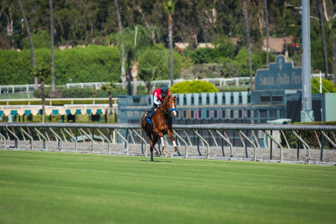Santa Anita S All New Turf Course Gets Thumbs Up From