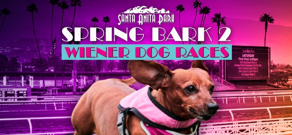*Cancelled* Spring Bark 2