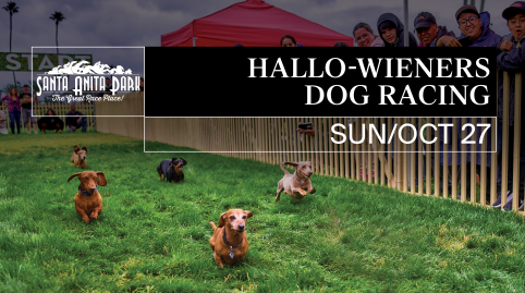 Hallo-Wieners: Wiener Dog Racing & Costume Contest