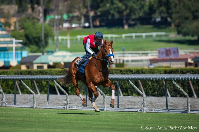 Santa Anita S Highly Acclaimed Turf Course Fully Renovated