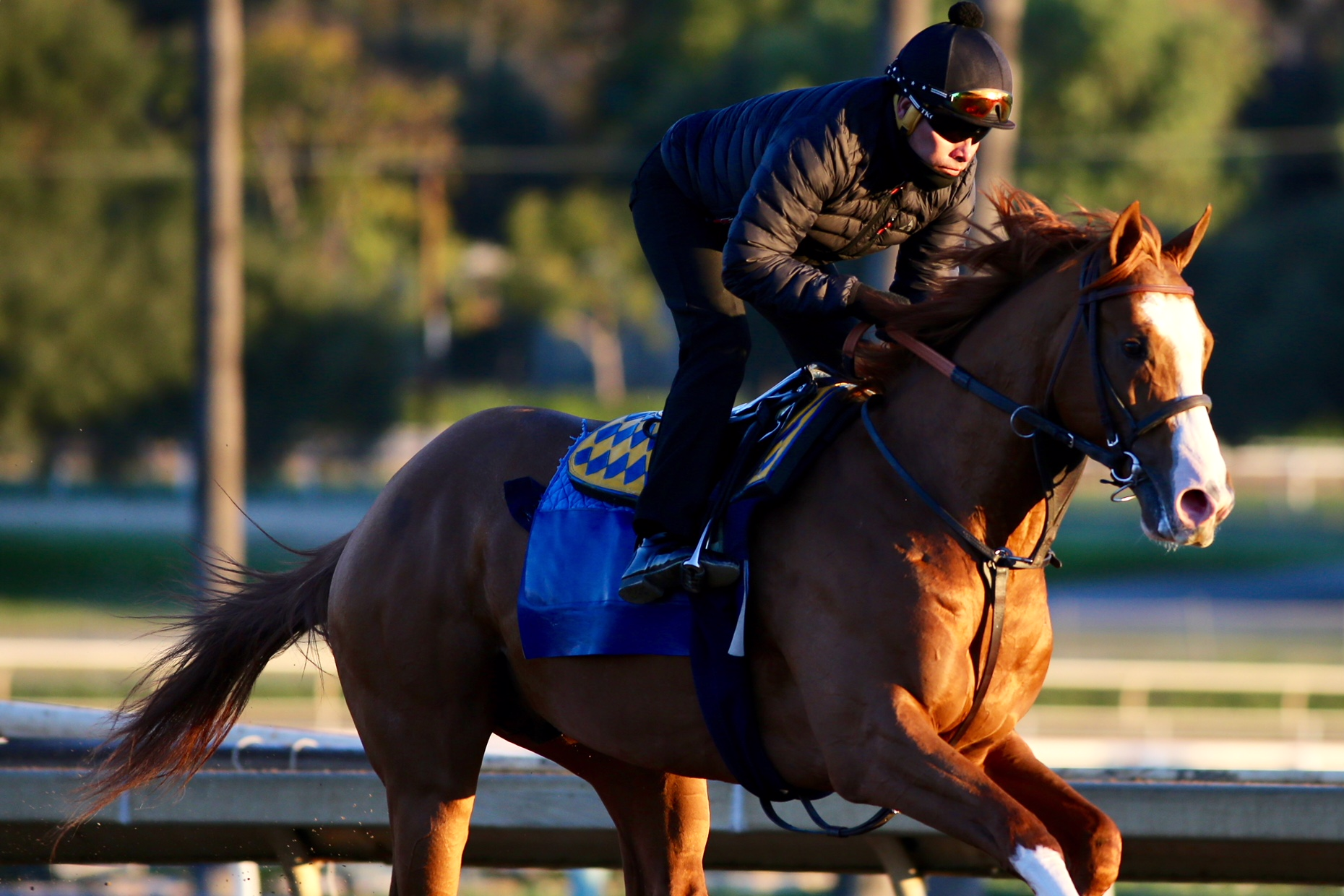 Stable Notes By Ed Golden Saturday February 23 2019