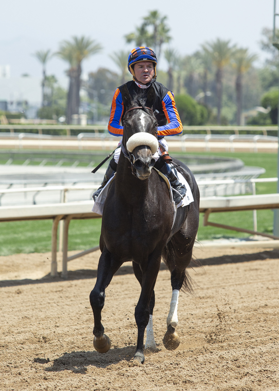 Favored Maxim Rate Proves Gamest In Taking Grade Iii