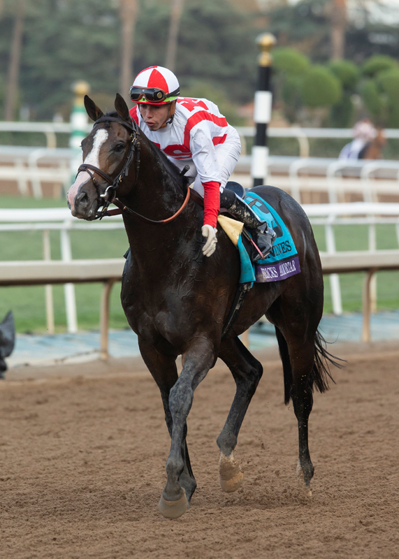 Stable Notes By Ed Golden Sunday November 3 2019