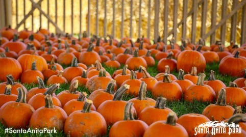 Family Fun Zone with Santa Anita Pumpkin Patch