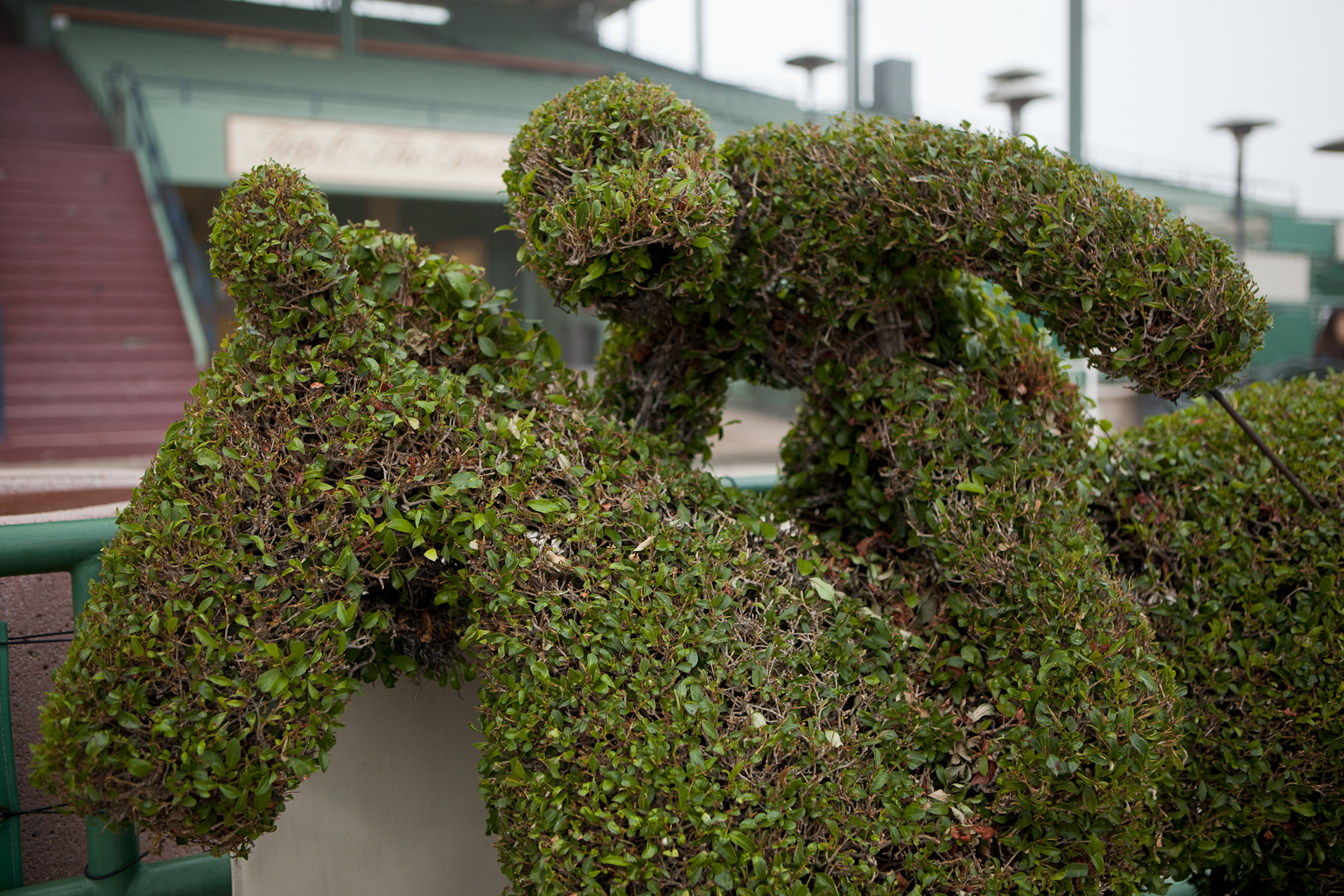 Horse Topiary (Clocker's Corner)