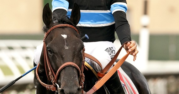 Shared Belief cb1 72