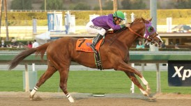 California Chrome deb