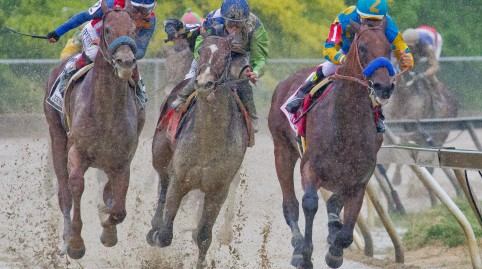 Sky View Terrace: Belmont Stakes Day