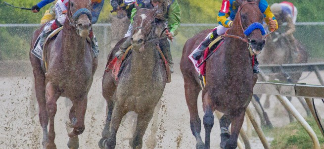 Horse Racing 2015: Preakness Stakes Day MAY 16