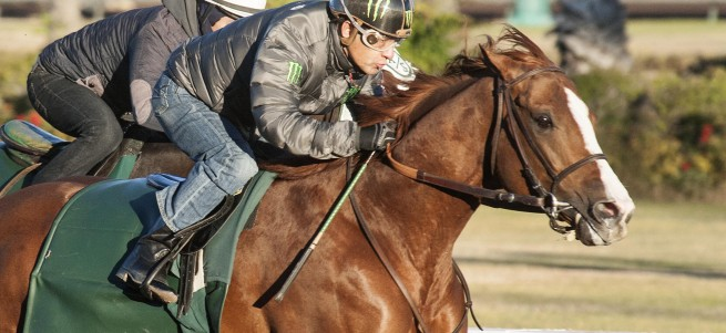 California Chrome with Victor Espinoza up works with company on December 27