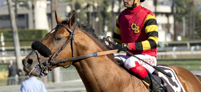 Jockey Tiago Pereira guidse Toowindytohaulrox to the winner's circle after their victory in the Grade III, $100,000 Daytona Stakes, Saturday, December 26, 2015 at Santa Anita Park, Arcadia CA. © BENOIT PHOTO