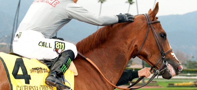 CALIFORNIA CHROME QUOTES