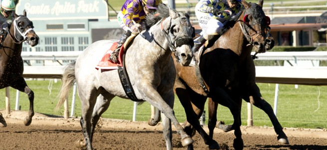 CRK Stable's Kobe's Back's and jockey Gary Stevens, left, overtake Salutos Amigos (Rafael Bejarano) for victory in the Grade II $200,000 Palos Verdes Stakes Sunday, February 7, 2016 at Santa Anita Park, Arcadia, CA. Benoit Photo
