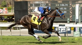 Al and Sandee Kirkwood's Boozer and jockey Rafael Bejarano win the $100,000 California Flag Handicap Saturday, October 18, 2014 at Santa Anita Park, Arcadia, CA. ©Benoit Photo