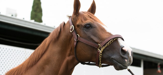 california-chrome-at-barn