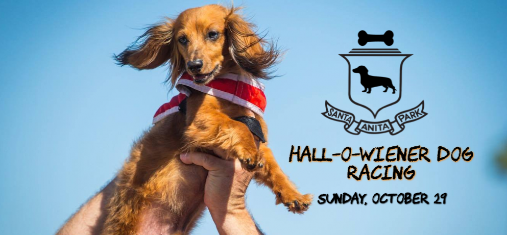 Hall-o-Wiener Dog Races