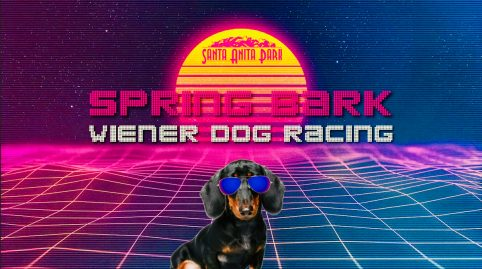 Spring Bark Wiener Dog Racing