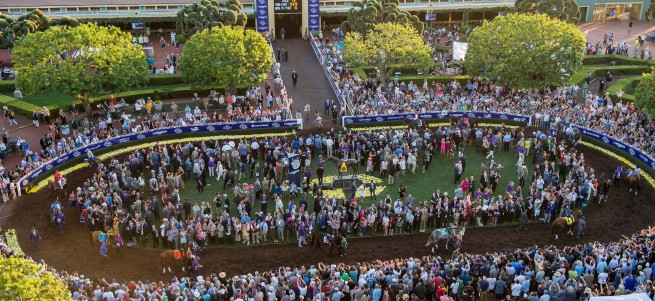 ARCADIA, CA - NOVEMBER 05: Fans watch the horses in the walking ring before the Breeders' Cup Classic during day two of the 2016 Breeders' Cup World Championships at Santa Anita Park on November 5, 2016 in Arcadia, California. (Photo by Michael McInally/Eclipse Sportswire/Breeders Cup)