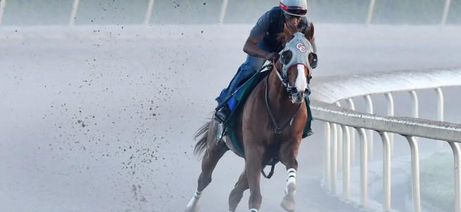 California Chrome last breeze credit Lauren King2