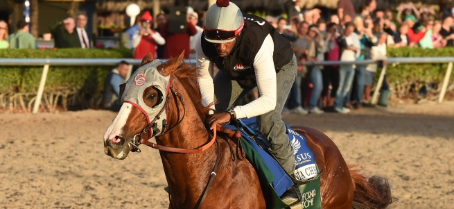 California Chrome works credit Leslie Martin