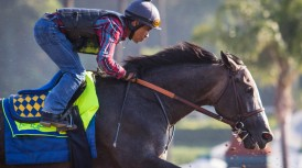 arrogate work sun jun 18 zm