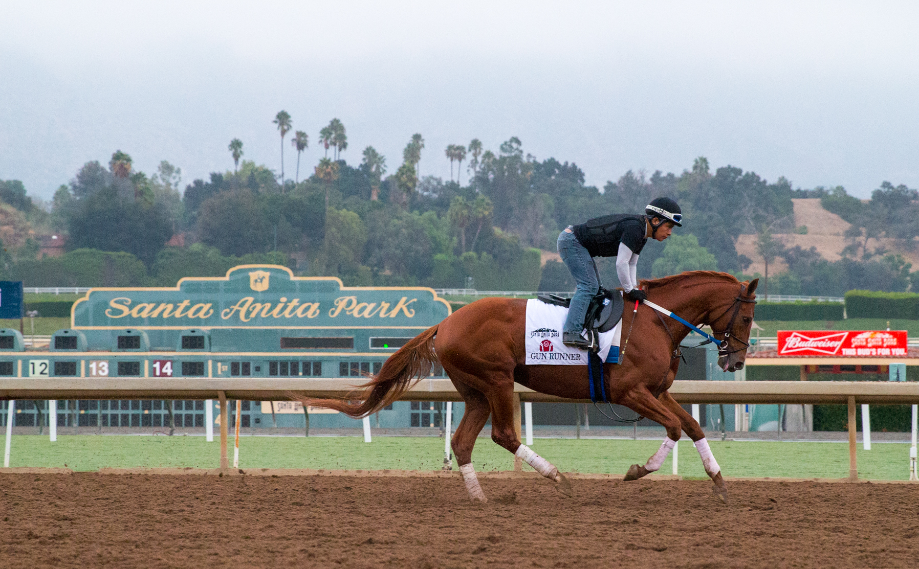 Led By Classic Winner Gun Runner Three Breeders Cup