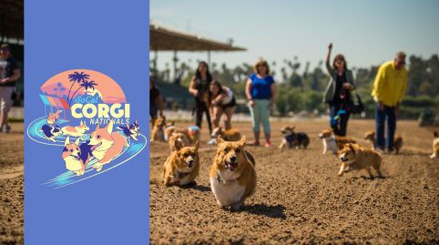 SoCal Corgi Nationals